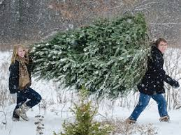 Christmas Tree Permits Colorado Springs by How To Get Your Christmas Tree Permit From White River National