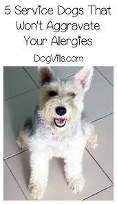 Do Hypoallergenic Dogs Still Shed by 2951 Best Dog Breeds Images On Pinterest Dog Breeds Dog