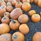 Pumpkin Patch In Homer Glen Illinois by Konow U0027s Corn Maze 85 Photos U0026 47 Reviews Attraction Farms