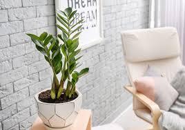 schattenliebende zimmerpflanzen unsere top 10 plantura