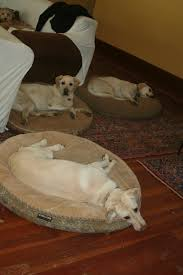 Kirkland Dog Beds by Doggie Heaven Hotel Things To Do With Dogs