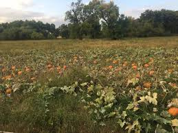Pumpkin Patch Sioux Falls Sd by Pick A Pumpkin Get Lost In A Corn Maze U2013 Siouxfalls Business