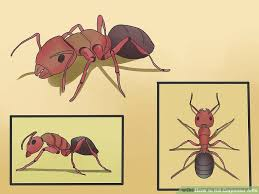 Flying Ants In Bathroom Window by How To Kill Carpenter Ants 12 Steps With Pictures Wikihow