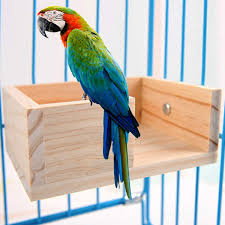 Amazoncom KAMEIOU Pet Bird Perch Parrot Parakeet Stand Platform