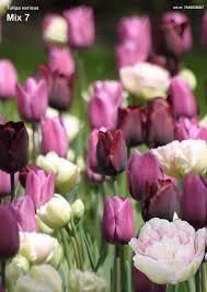 13 best flower bed images on flower beds raised beds