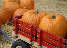 Pumpkin Patch North Austin Tx by 186 Best Sweet Pickins Pumpkin Patch Images On Pinterest Autumn