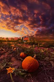 Pumpkin Farms In Wisconsin Dells by 85 Best Wisconsin Images On Pinterest Landscapes Badger And