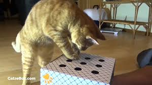 Kitten Playing Whack A Mole With CatzeBox Cardboard Box For Cats