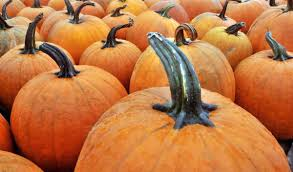 Free Shark Pumpkin Carving Templates by Halloween U0027donald Trumpkin U0027 And Other Trendy Pumpkin Carving