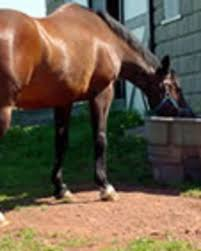 Dog Horse Shedding Blade by Tips For Helping Your Horse Shed Smoothly The Horse Owner U0027s Resource