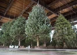 Christmas Tree Farms Albany Ny by The