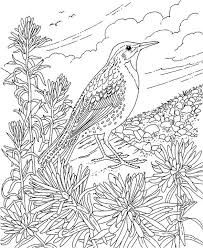 Interesting Design Ideas Grouse Animal Coloring Pages Wyoming Western Meadowlark Page Purple Kitty