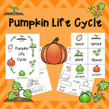 Life Cycle Of A Pumpkin Seed Worksheet by Pumpkin Life Cycle Posters Worksheets And Mini Book Garden