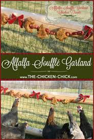 The Chicken Chick®: Alfalfa Soufflé Garland Chicken Treats Diy Treat Basket Backyard Chickens Treating Bumblefoot In Chicken Coops Homemade Coops Backyard Chickens Page 1 Garden Delights Homemade Scratch Block And Boredom Buster For 175 Best Homestead Images On Pinterest Backyard Chickensthe Girls Get Treats Being Good Layers The Chick 20 Winter Busters Causes Prevention Treatment Treats Guide Dont Love Your Pets To Getting A Cold Treat Youtube Learn The Benefits Of Pumpkin Your Flock From Tillys