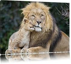pixxprint schöner löwe mit jungtier auf leinwand