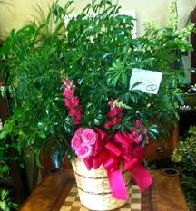Home Decor Southaven Ms by About Us Dorothy K U0027s Flowers U0026 More Hernando Ms