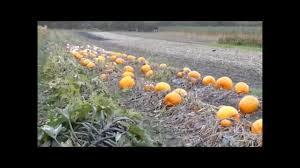Meadowbrook Pumpkin Farm by Pyo Pumpkins You Tube Youtube