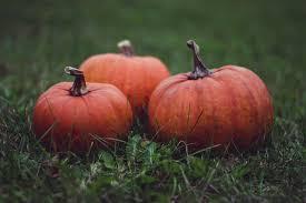 Grims Pumpkin Patch Pa by Harvest Fest St Mary Harvest Fest Fall Picnics Berks County Pa