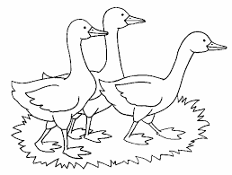 Explore Adult Coloring Pages Flamingo And More