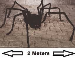 Motion Sensor Halloween Decorations Uk by The Uk U0027s Best Spine Chilling Scary Deluxe Large Halloween Party