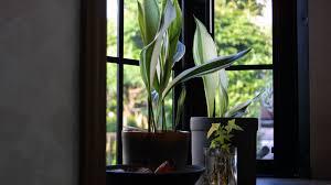 schöne badpflanzen verwandeln das badezimmer in eine