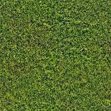 Seamless Grass Lawn Texture