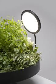 plantes vertes d interieur plante verte d intérieur et peu de lumière ce n est plus un
