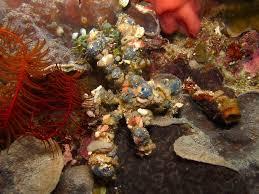 decorator crabs eat fish decorator crabs eat fish 28 images decorator crab t 504