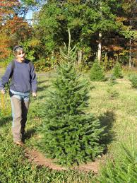 Canaan Fir Good Christmas Tree by Wolgast Tree Farm Christmas Trees Bluebird Boxes U0026 Local Honey
