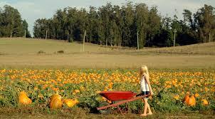 Peter Pumpkin Patch Petaluma a very pumpkin weekend the real time farms blog