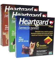 heartgard for cats heartgard plus chewables kvsupply