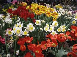 garden ideas grow bulbs white bulb flowers fall blooming bulbs