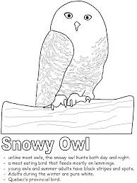 Snowy Owl Coloring Pages 1 Page
