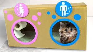 diy cat toilet craft ideas for kids on box yourself youtube
