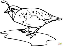 Quails Coloring Pages