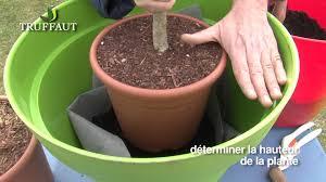 fruitier en pot plantation et entretien jardinerie truffaut tv