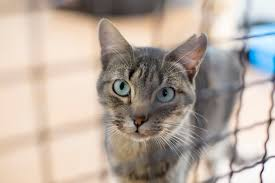 adopt a cat june is adopt a cat month cattime