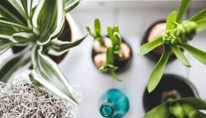 luftqualität verbessern durch pflanzen ein simpler trick