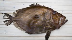 poisson a cuisiner recette pour cuisiner le conseils de préparation