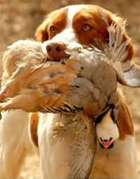 top 10 hunting dog breeds the cozy pet blog i like