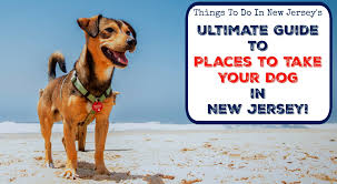Haunted Attractions In Pa And Nj by The Ultimate Guide To Places To Take Your Dog In New Jersey