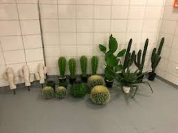 kaktus deko blumen künstliche pflanzen fürs wohnzimmer