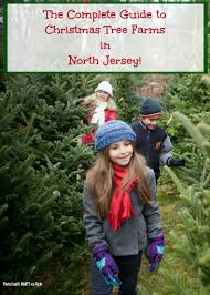 Nordmann Fir Christmas Tree Nj by The Complete Guide To Christmas Tree Farms In North Jersey