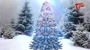 Chicago Christmas Tree Disposal by 100 2017 Christmas Trees Best 25 Christmas Trees Ideas On