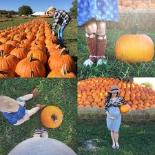 Rombachs Pumpkin Patch Hours by Family Archives Raising Roberts