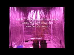 growing tomatoes indoor with led grow light g8led 450 watt