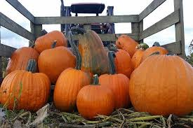 Pumpkin Picking Richmond by The 7 Best Pumpkin Patches In And Around Vancouver Inside