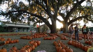 Pumpkin Patch Orlando Area by Boarding Painted Oaks Academy