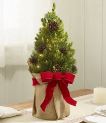 Woodland Tabletop Live Christmas Tree Lighted