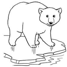Polar Bear On Ice Coloring Page